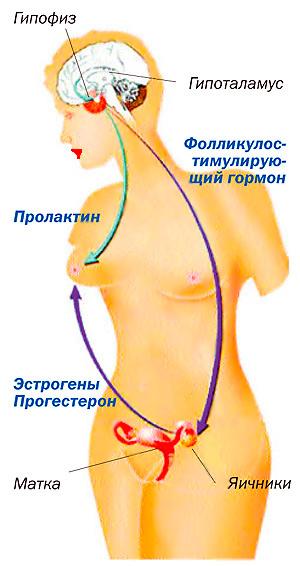 влияние спермы во влагалище на увеличение груди